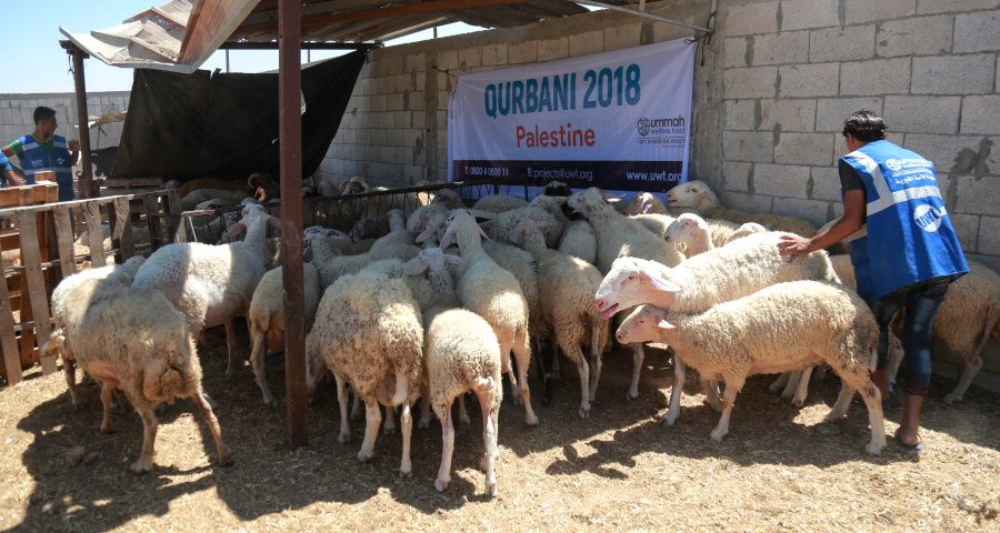 Qurbani Summary